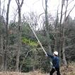 最長6.5mまで伸びるノコギリ 枝打ち一発 N-763