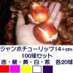 ジャンボチューリップ球根単色5種セット  赤・桃・黄・白・紫色 各20個 計100個
