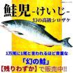 【残りわずか!】鮭児(けいじ) 1本・2.4〜2.7kg/漁業協同組合証明書付/最高級鮭  ギフト 贈答 プレゼント 母の日 父の日 お中元