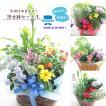 敬老の日 鉢花 寄せ鉢セット 花 ギフト プレゼント あすつく 送料無料「スタッフにお花はお任せ寄せ鉢セットL」
