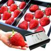 苺八景 いちごはっけい 滋賀県野洲市産 近江 おうみ 特産 紅ほっぺ 特大サイズ 16粒入り