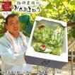 物部農園 桃太郎ぶどう 2キロ箱