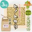 【玄米3kg】自然栽培のヒノヒカリ 大分県「くにさき農未来」・玄米