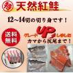 紅鮭 鮭 切り身 送料無料 鮭 シャケ 紅ジャケ 塩鮭 甘...