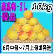 南高梅優品2L-10kg梅干・梅酒・他、有機肥料使用/和歌山県産青梅(緑から黄色になる)