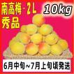 生梅南高梅秀品2L-10kg梅干・梅酒・他、有機肥料使用/紀州和歌山県産青梅