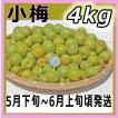 小梅4kg和歌山県産