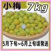 小梅7kg和歌山県産