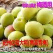 若大将青梅10kg有機肥料使用/紀州和歌山県産、青梅通販【クール便】