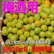 若大将青梅6.5kg有機肥料使用/紀州和歌山県産、青梅通販【クール便】