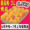 生梅南高梅優品3L-6.5kg梅干・梅酒・他、有機肥料使用/紀州和歌山県産青梅