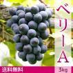 マスカット・ベリーA(種無し)ぶどう 送料無料 3kg