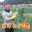 岩津ねぎ 送料無料 朝来特産 訳あり 4kg