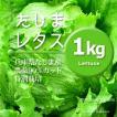 レタス 農薬90%カット 特別栽培【1kg】