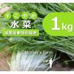 水菜 農薬90%カット 特別栽培【1kg】