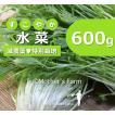 水菜 農薬90%カット 特別栽培【600g】