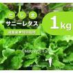 サニーレタス 農薬90%カット 特別栽培【1kg】
