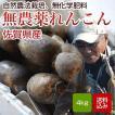 れんこん 無農薬 4キロ 佐賀県白石産 自然農法栽培 蓮根  レンコン
