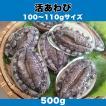 活あわび 100〜110gサイズ 500g