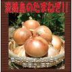 【自宅用♪】淡路島玉ねぎ 訳あり10kg 【送料無料】玉ねぎの本場、淡路島から産地直送♪