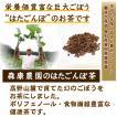 送料無料 はたごんぼ茶 ノンカフェイン ごぼう茶 35g(3.5g10パック 無農薬