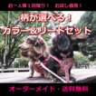 1回限定 人気のお試し犬用首輪・リードセット オーダーメイドで作成 小型犬 中型犬 子犬