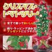 クリスマストマトツリー