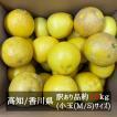 訳あり土佐文旦小玉サイズ 約10kg  M-Sまたはサイズ混 高知県産または香川県産