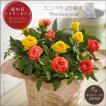 母の日プレゼント(ギフト)2019・ミニバラ 2色植え(寄せ植え)[母の日カード付・送料無料]