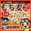 もち麦 1kg(500g×2) 送料無料 驚きの食物繊維(β-グ...