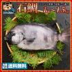 イシダイ 石鯛 (生) 1尾  約1kg〜1.5kg 天然 香川県産 神経抜き 冷蔵  [送料無料 鮮魚 クチグロ くちぐろ  口黒 いしだい 白身 魚 刺身 ] グルメ