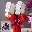 敬老の日 ギフト 花 プレゼント 花鉢 鉢植え ミディ胡蝶蘭 2本立ち 14輪以上(つぼみ込) 選べる3色  イベントギフトO 2021