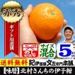 【販売終了】豊作会 伊予柑・いよかん(秀品) 5kg 和歌山県産/有田みかんの里から