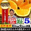 清見オレンジ5kg サイズおまかせ  有田みかん豊作会  和歌山県から産地直送