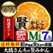 賢みかん 大橋さんちの「かしこみかん」 約7.5kg (Mサイズ) 特選ギフト品(和歌山みかん)(有田みかん)