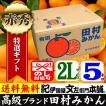 田村みかん (特選)贈答用ギフト選別品(2Lサイズ・5kg)1箱=約30果前後( LL ) 和歌山みかん有田みかんの最高ブランド果実