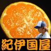 和歌山 有田みかん 上友農園・上野山さんちの有田ミカン  約5kg (Lサイズ 約45果) 特選ギフト品