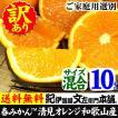 わけあり 訳あり清見オレンジ10kg 紀州和歌山有田みかんの里から TVで話題の(規格外 不揃い)果実 割引セール