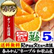 ネーブルオレンジ(紀州有田産)約5kg/正品/サイズ選別無し 常温便
