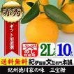 紀州湯浅特産・葉付き三宝柑(2L/10kg)約45個入 ・和歌山県有田みかんの里から 常温便