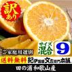 わけあり柑橘完熟田の浦オレンジ(新甘夏・サンフルーツ)紀州和歌山県有田みかんの里から(買得品9kg)ご家庭用