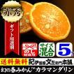 幻の春みかん カラマンダリン ギフト用選別品 5kg  和歌山県産の甘い柑橘