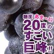 巨峰村・朝穫り(即日発送)紀州和歌山金屋産 巨峰ぶどう 1kg(ハウス栽培)