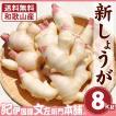 フレッシュ新しょうが8kg(4kg×2箱)・和歌山県産 紀ノ川河口で栽培されている高品質の新生姜を新鮮 産地直送 自家製 甘酢漬け、紅ショウガ、生姜湯