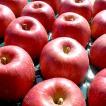 長野県産りんご あいかの香り 贈答用 5kg
