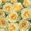 Daisy ポーランド ペーパーナプキン Lunch napkins 黄色の薔薇の壁紙 Yellow Rose Wallpaper バラ売り2枚1セット SDOG-011001 デコパージュ ドリパージュ