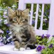 nouveau オーストリア ペーパーナプキン かわいい猫 Kitty 74915 バラ売り2枚1セット デコパージュ ドリパージュ