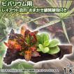 (観葉植物)ビバリウム用 レイアウト流木 おまかせ観葉植物付(1本)