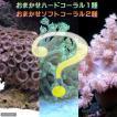 (海水魚 サンゴ)おまかせソフト2種+ハード1種セット Sサイズ 沖縄別途送料 北海道航空便要保温