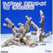 (海水魚)ライブロック 枝状Mサイズ(1個)(形状お任せ) 北海道・九州航空便要保温